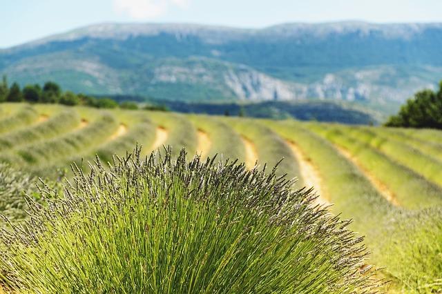 田舎 写真 風景