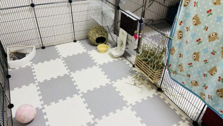 うさぎ部屋の写真